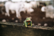 Frog made from clay