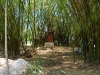 our bamboo forest with bush toilet
