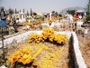 Yellow flowera dominates the graves
