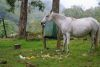 the white trash horse, checking every single trash bag to find tasty snacks - every day and leaving a mess behind!