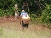 a local man carrying peeled yucca