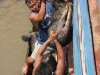 animals fall into water, are beaten, are thrown, are mistreated in several ways