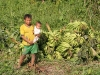 waiting to sell plantain; for a big bundle of plantain they receive 5 soles (US $2)
