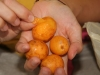 these fruits are Camu Camu and due to their high Vitamin C content they are terribly sour
