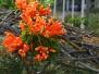 Plants in Boquete