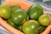 Caimito fruits